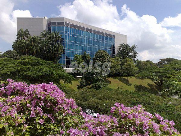 新加坡南洋理工大学的公共政策与全球事务学士课程受欢迎
